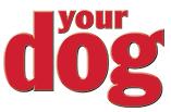 yourdoglogo