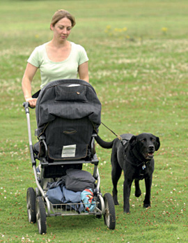Will my dog cope with my newborn baby?